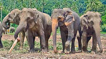 elephants-nature-sri-lanka-01