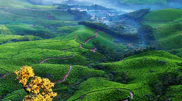kerala-tea-and-spice-country-04