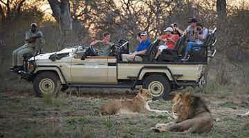 safari-sights-fly-in-03