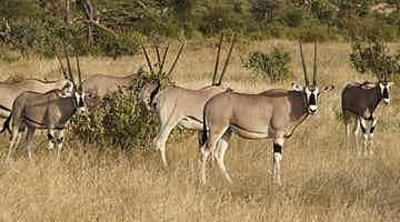 samburu-fly-in-safari-03