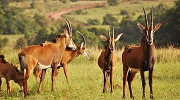 shimba-hills-green-safari-camp-01