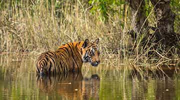 tiger-trails-of-india-07