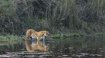 tigers-and-the-taj-06